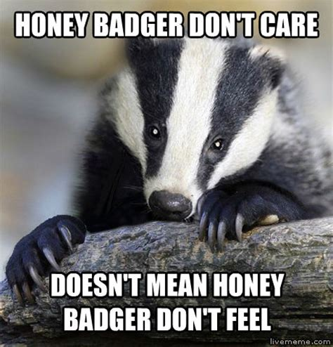Badger Meme - honey badger don t care meme 28 images you think i m