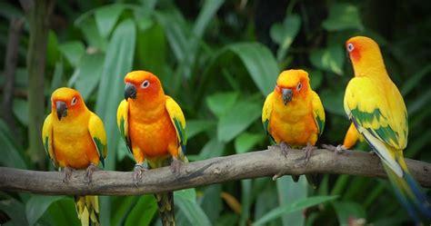 Pakan Burung Lomba Dan Harian Pakan Bird Lomba Dan Harian tips panduan burung bird dunia burung