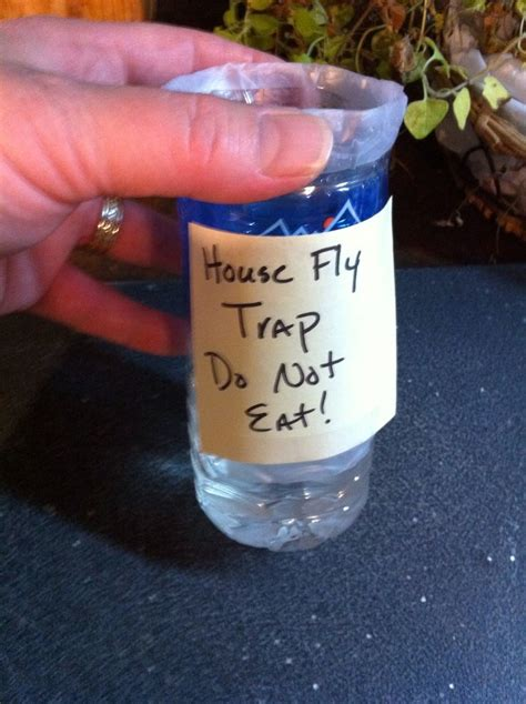 house fly traps fly traps and how to make an on