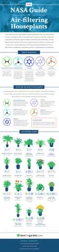 best houseplants for air quality infographic top 18 houseplants for purifying the air you