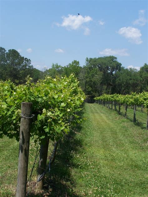 Irvin House Vineyard by 17 Best Images About South Carolina On