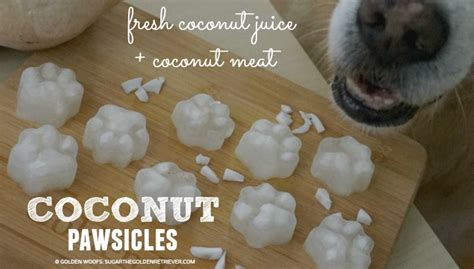 can dogs drink coconut water refreshing fresh coconut popsicles pawsicles