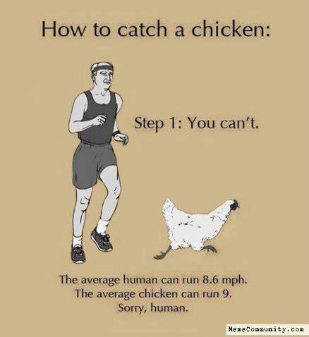 Chicken Running Meme - 30 very funniest chicken meme pictures and photos