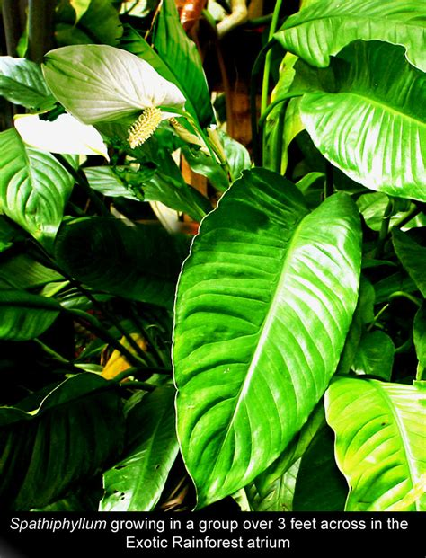 dominant plants in tropical rainforest tropical forest tropical forest dominant plants