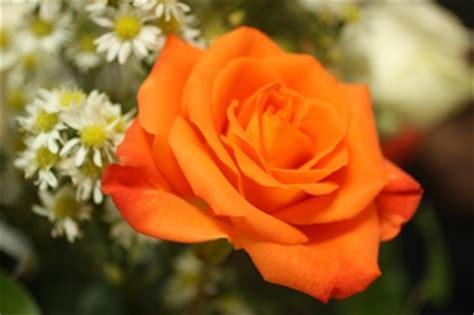 regalare un fiore dillo con un fiore