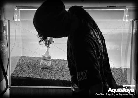 Pupuk Tancap Untuk Aquascape cara membuat aquascape style iwagumi aquajaya