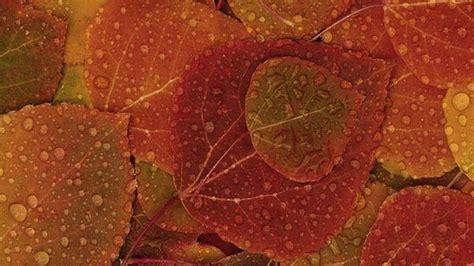 ipad wallpapers perfect  autumn