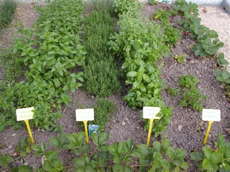 How To Plant An Herb Garden by Lawn And Garden Planting A Outdoor Herb Garden