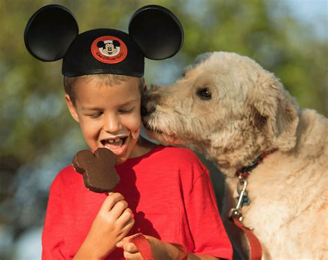 dogs at disney world walt disney world welcomes dogs at select hotels recommend