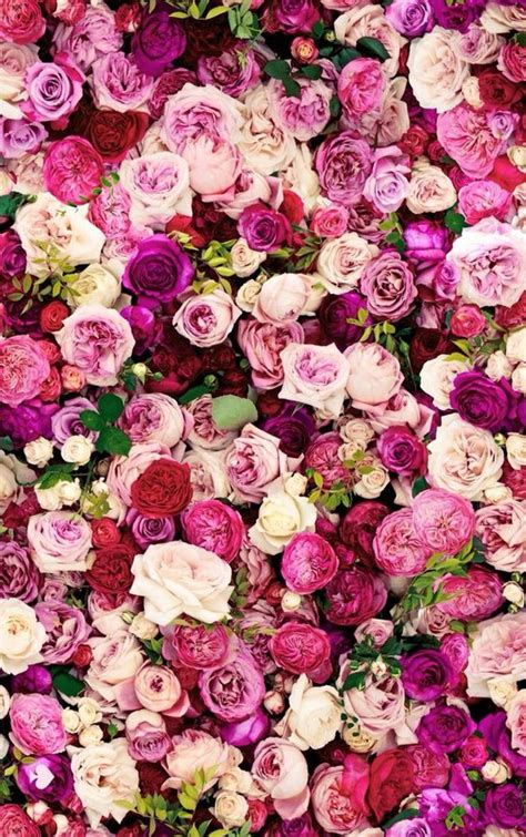 wallpaper for iphone roses kate spade roses wallpaper flowers pinterest follow