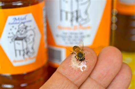 libro minicuentos de abejas y las abejas son vitales para los humanos y est 225 n desapareciendo mi puerto rico verde