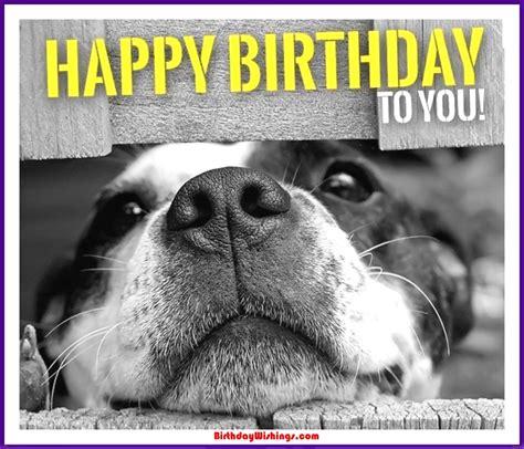 funny happy birthday memes  cats dogs funny animals