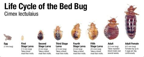 i think i have bed bugs herbal health care bed bug repellents