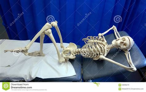 skeleton in bed lazy bones stock photo image of mandible body coccyx