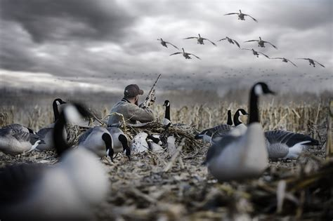 layout goose hunting low rider ii layout blind rig em right waterfowl