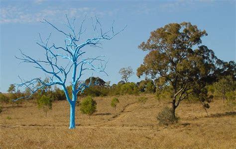 Australian Botanical Gardens Mt Annan Mount Annan Botanic Garden Images New South Wales Australia