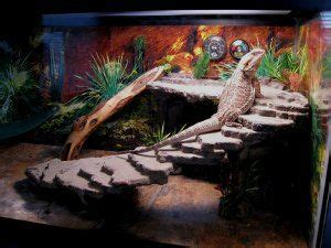 Reptile Cage Decor by 25 Best Ideas About Bearded Cage On