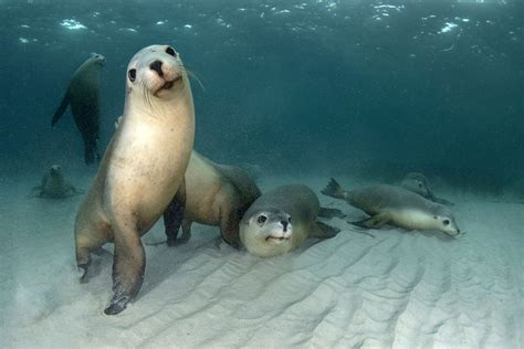 seal  good photographer captures adorable moment seal poses underwater  family photo