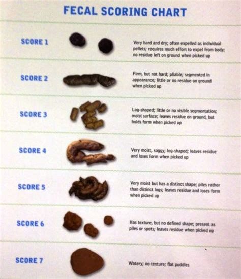 Cat Stool Color purina s fecal scoring chart pets us and charts