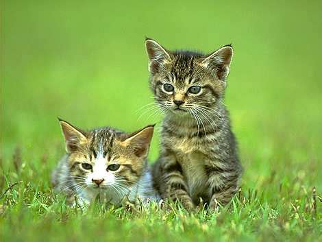 lifes abundance food instinctive choice premium canned cat food a smart choice for cat owners