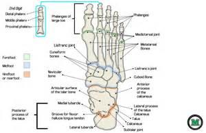 gallery gt accessory bones foot