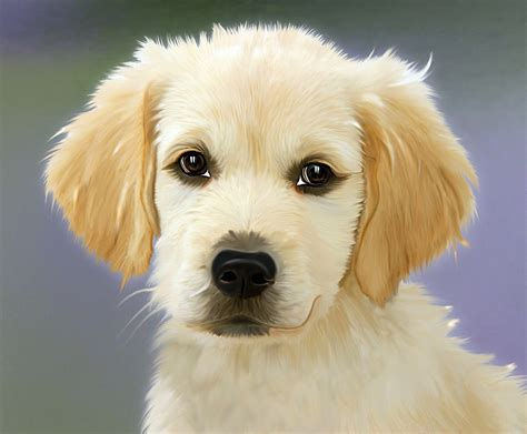 how many times a day should a puppy how many times a day should i feed my a to z pet care