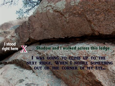 shadow my journey as my came out of the closet books adventures of shadow the rving when do rattlesnakes