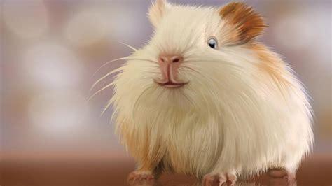 hamster mobile free hamster 4k wallpapers for your desktop or mobile screen