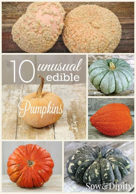 are pumpkins edible 10 edible pumpkins to be something new and other