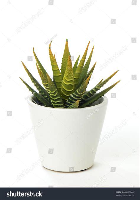 white pot cactus aloe vera in a white sqare pot on white