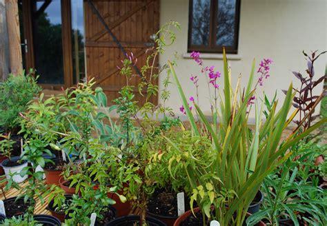 winter ironwood gardens