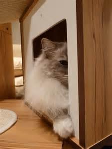 cat modern furniture hagen vesper v tower modern cat tree furniture review