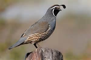 graham owen bird photography