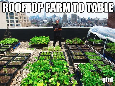 Farm To Table Nyc by Nyc Chef Richard Farnabe S Rooftop Farm To Table