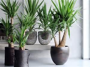 le 231 on de d 233 co quelle plante pour mon bureau