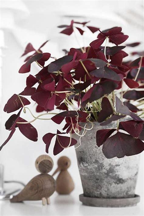 Yuka Plante D Intérieur by Les 25 Meilleures Id 233 Es Concernant Plante D Int 233 Rieur Sur
