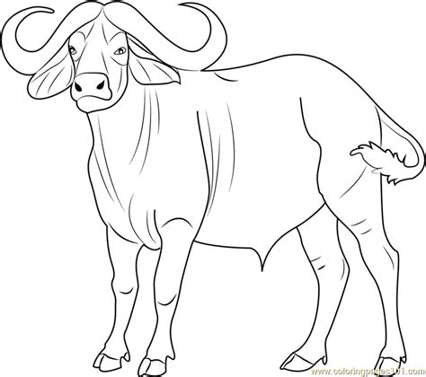 cape buffalo coloring page free buffalo coloring pages