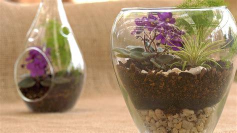 a beginners guide to creating terrariums merrifield garden center