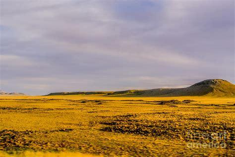 golden grassland photograph by gib martinez