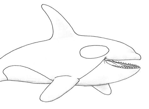 Killer Whale Coloring Page free coloring pages of whale drawing