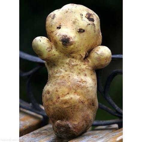 like a potato a potato that looks like a s board