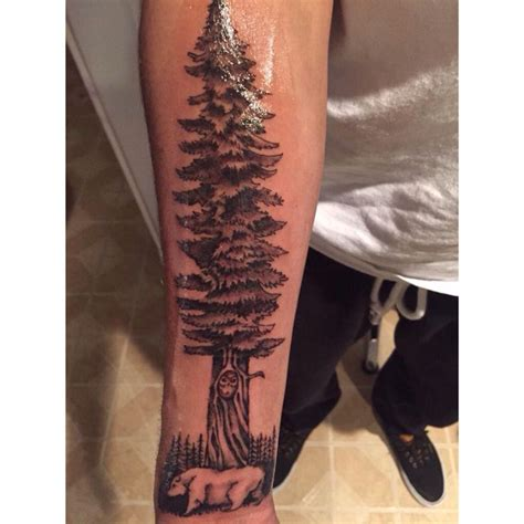 redwood tree tattoo redwood tree outline www imgkid the image