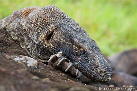 sleeping dragon burrard lucas photography