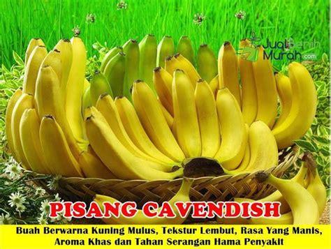 Bibit Unggul Pisang Merah 344 best tanaman buah unggul 085707858020 images on