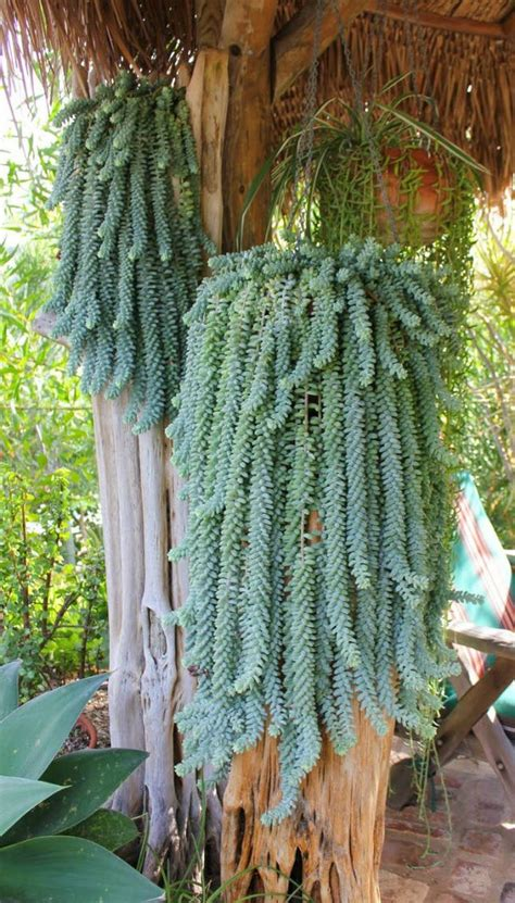 plants that drape 13 weird plants you didn t know you needed brit co