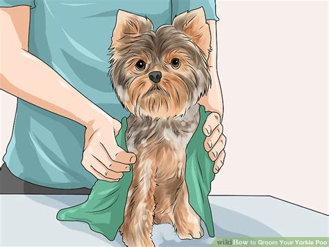 grooming yorkie poo how to groom your yorkie poo 10 steps with pictures wikihow