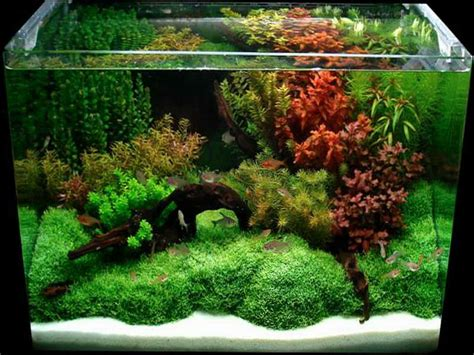 diy aquascape cool aquarium decorations with grass design raw material