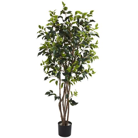 Potted Trees by 5 Foot Ficus Bushy Tree Potted 5333
