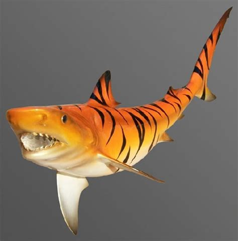 orange shark shark tiger full mount fish replica tribal flaming hot rod