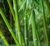 Makanan Ikan Cupang Instan kerajinan dari bambu itrucksltd